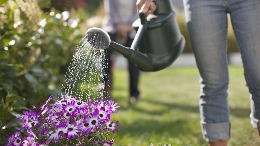 Resultado de imagen de regar plantas