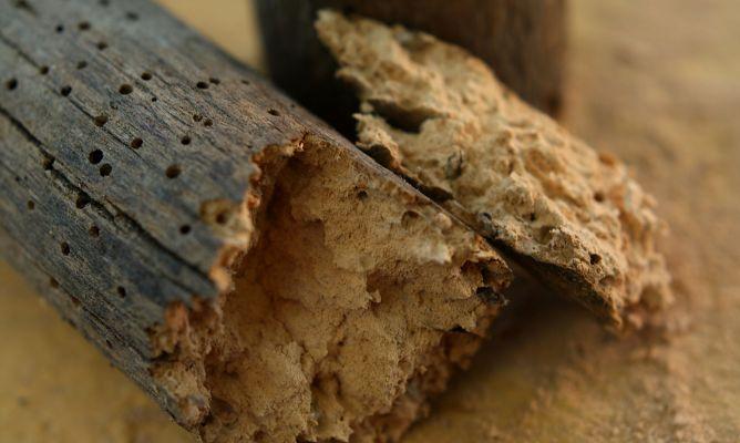 Tratamiento contra la carcoma bricoman a - Como eliminar la polilla de la madera ...