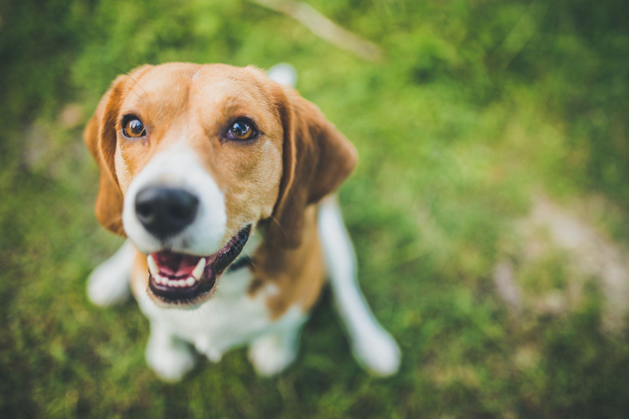 Cuidados para perros con sordera