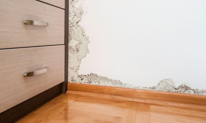 Tratamiento para eliminar moho bricoman a - Eliminar moho paredes ...