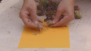 Siembras con semillas otoñales - Paso 2