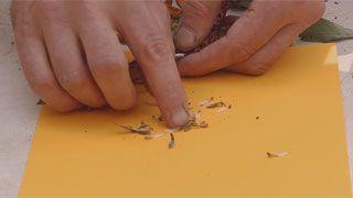 Siembras con semillas otoñales - Paso 3