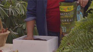 Siembras con semillas otoñales - Paso 4
