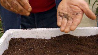 Siembras con semillas otoñales - Paso 5