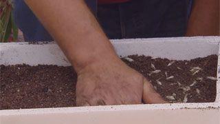 Siembras con semillas otoñales - Paso 6