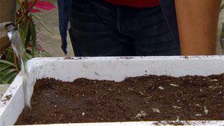 Siembras con semillas otoñales - Paso 7