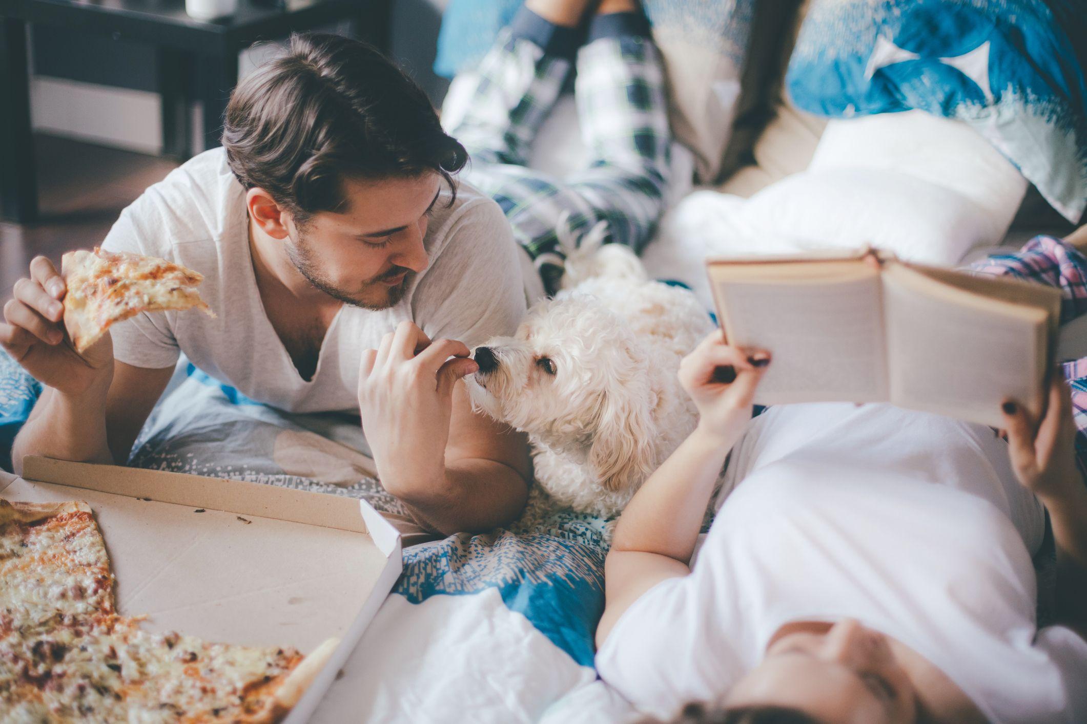 Comida para el perro