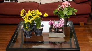 Plantas pequeñas para centros de mesa - Narcisos