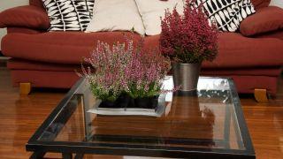 Plantas pequeñas para centros de mesa