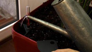 Decorar salón con una kentia en hidrojardinera - Detalle hidrojardinera