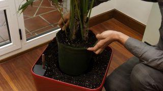 Decorar salón con una kentia en hidrojardinera - Paso 3