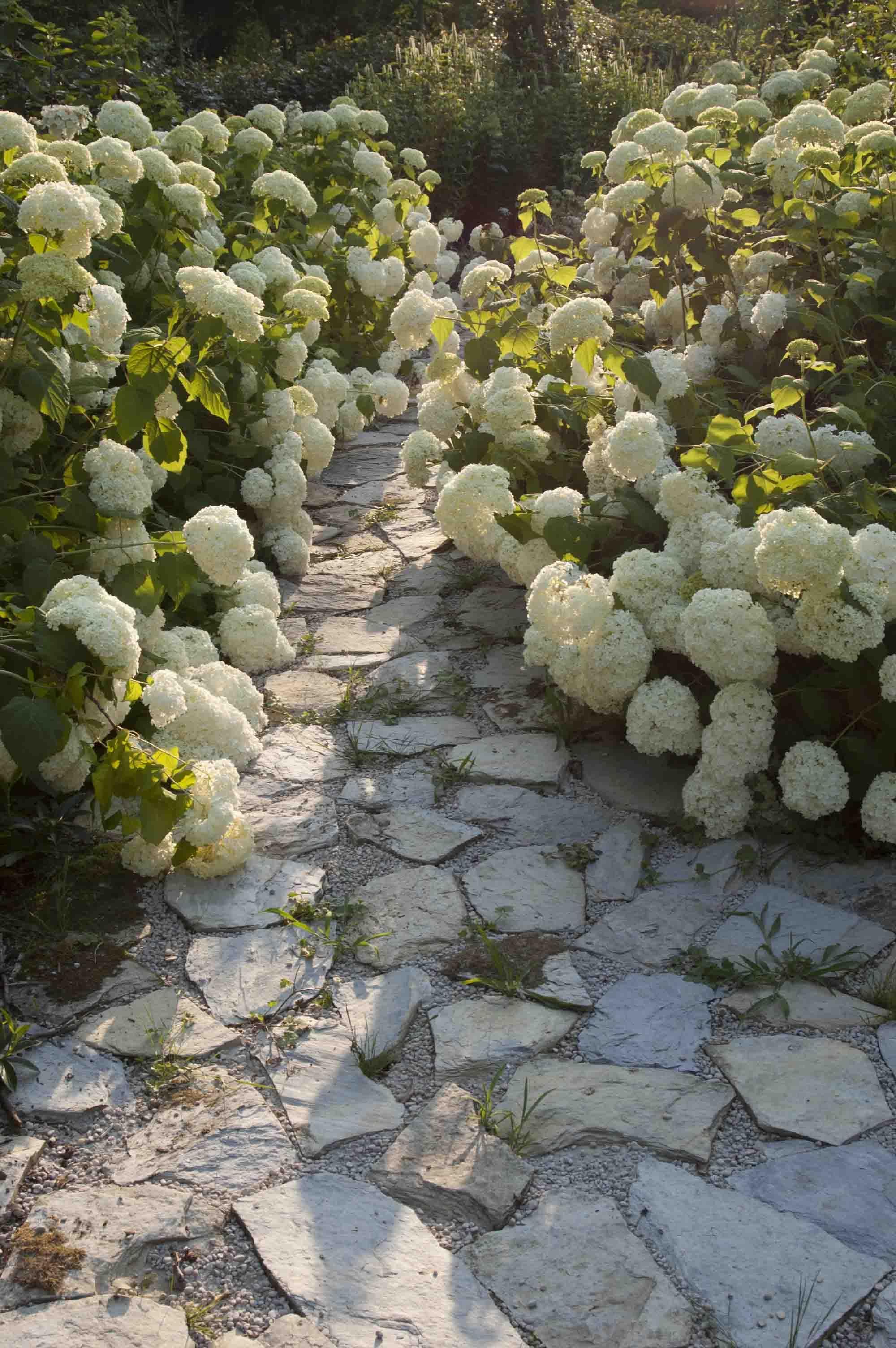 Galería de fotos de jardinería - Hogarmania