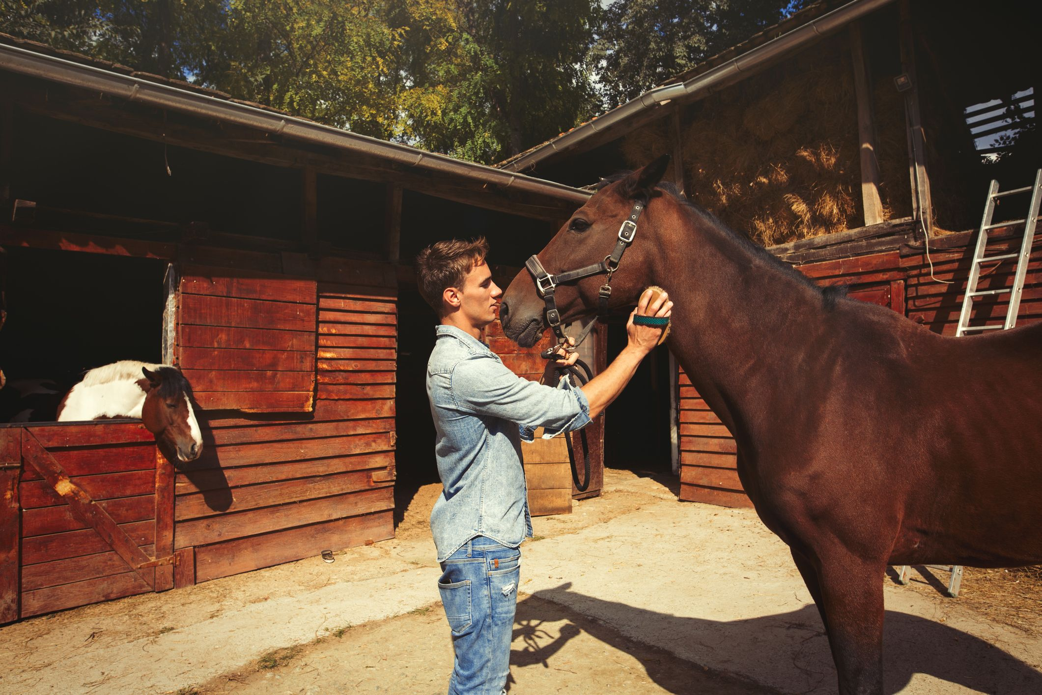 limpiar caballo