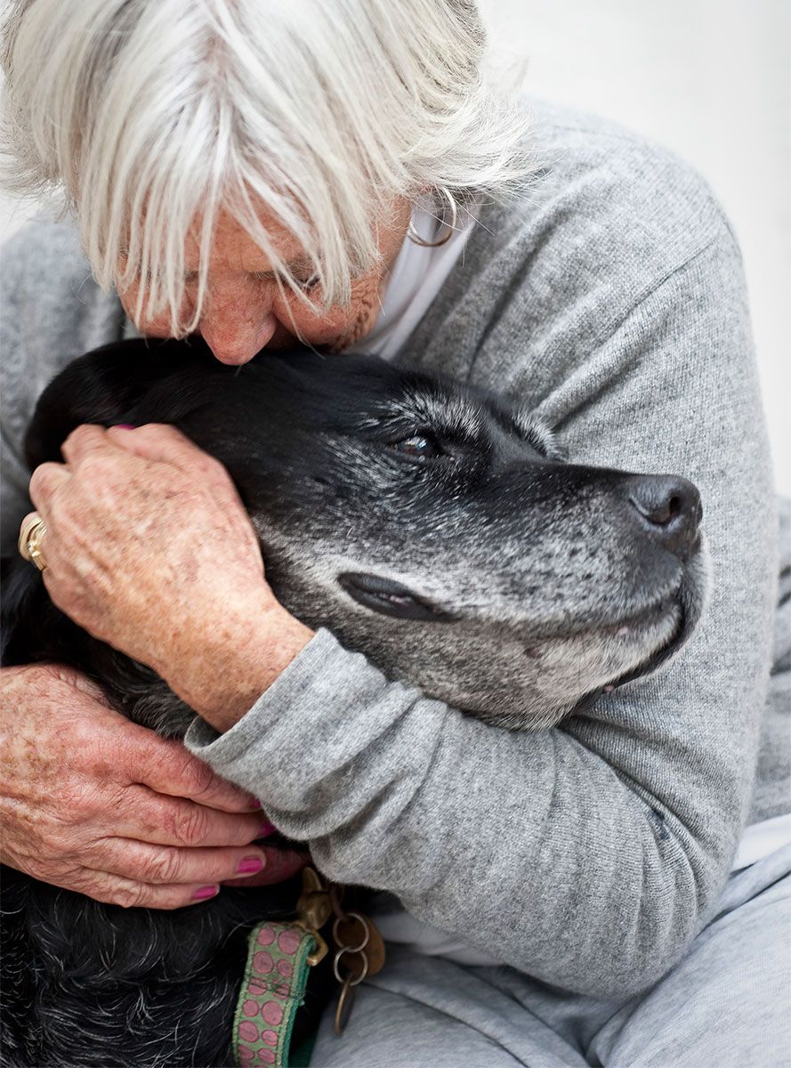 síndrome disfunción cognitiva perros