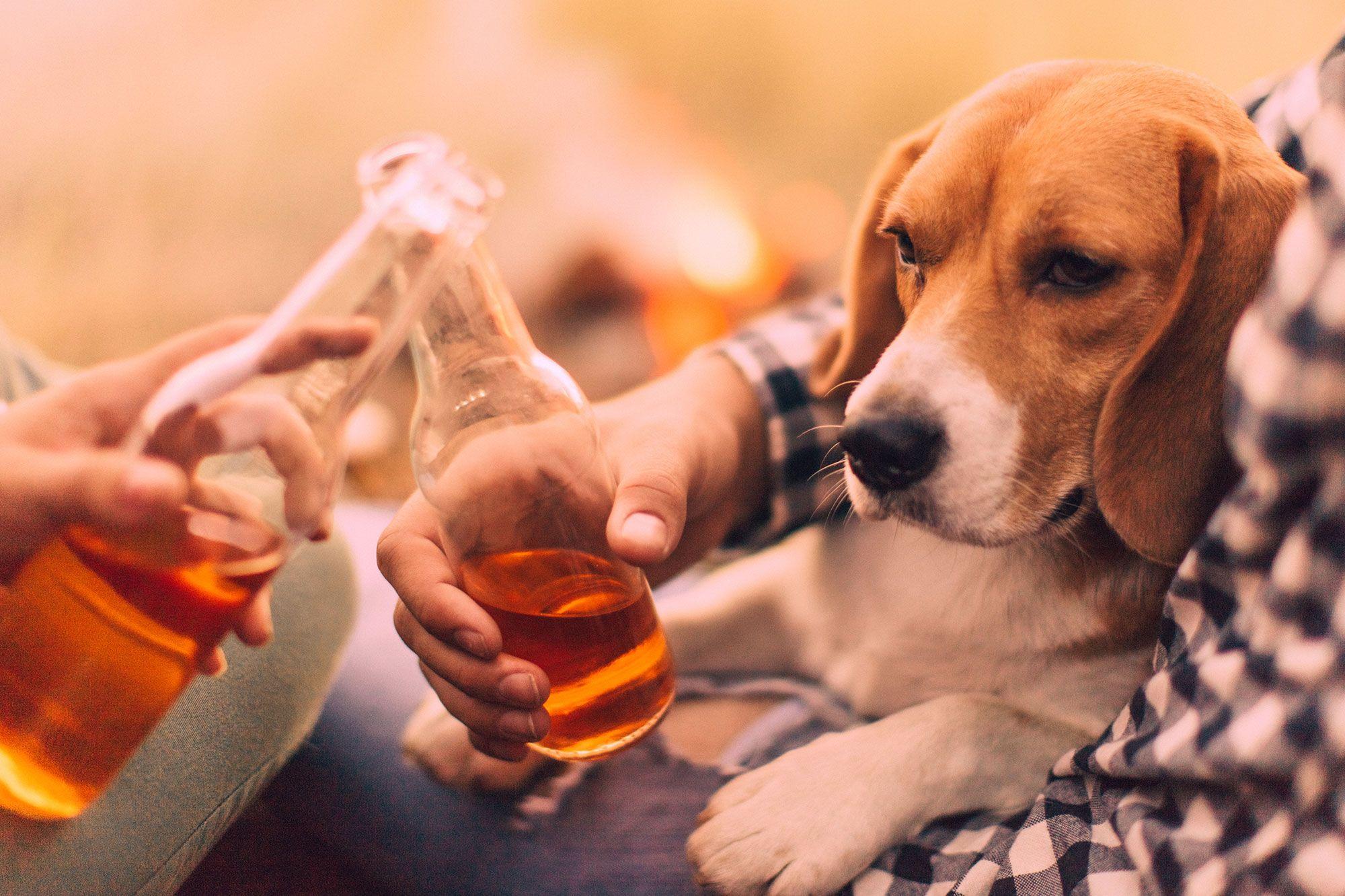 cerveza perros