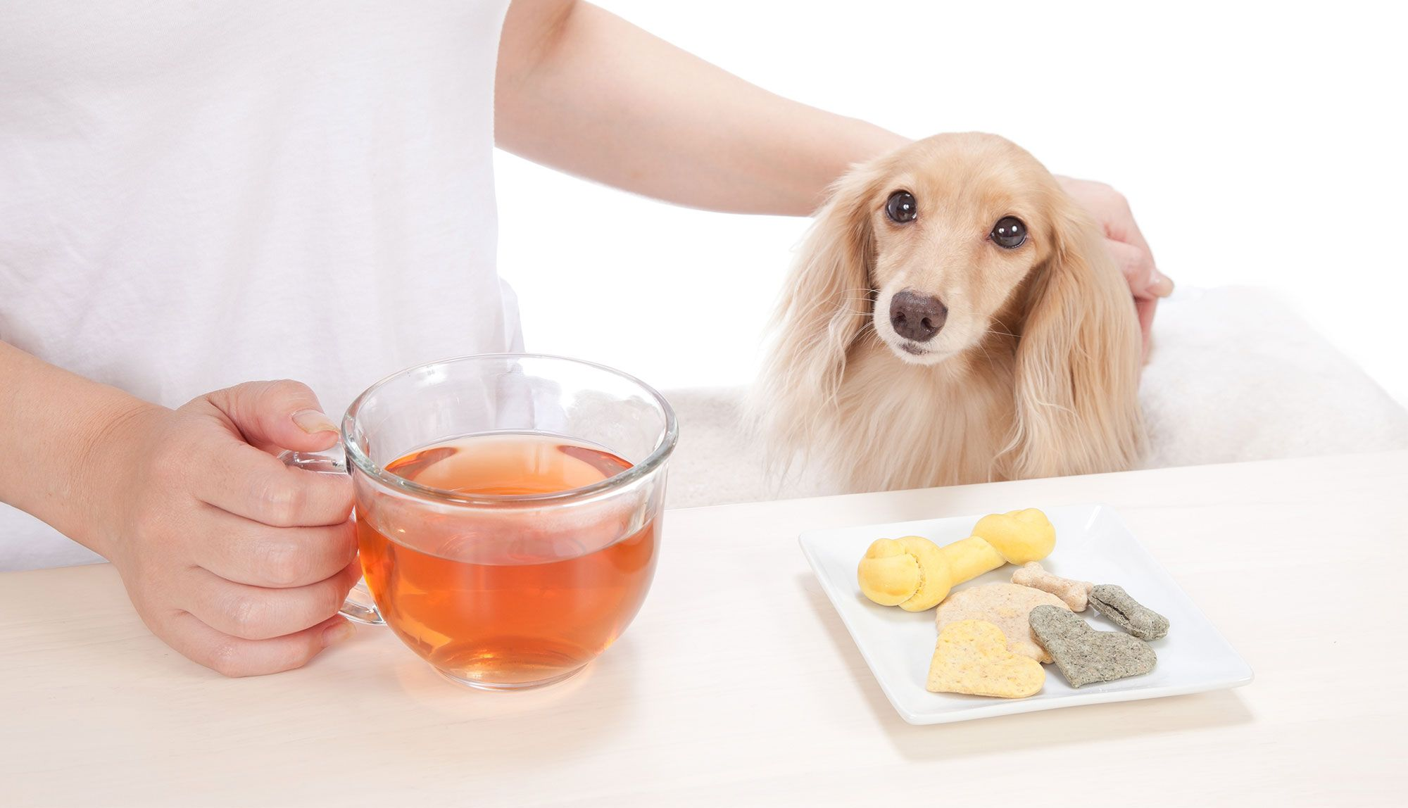 perros alimentación té