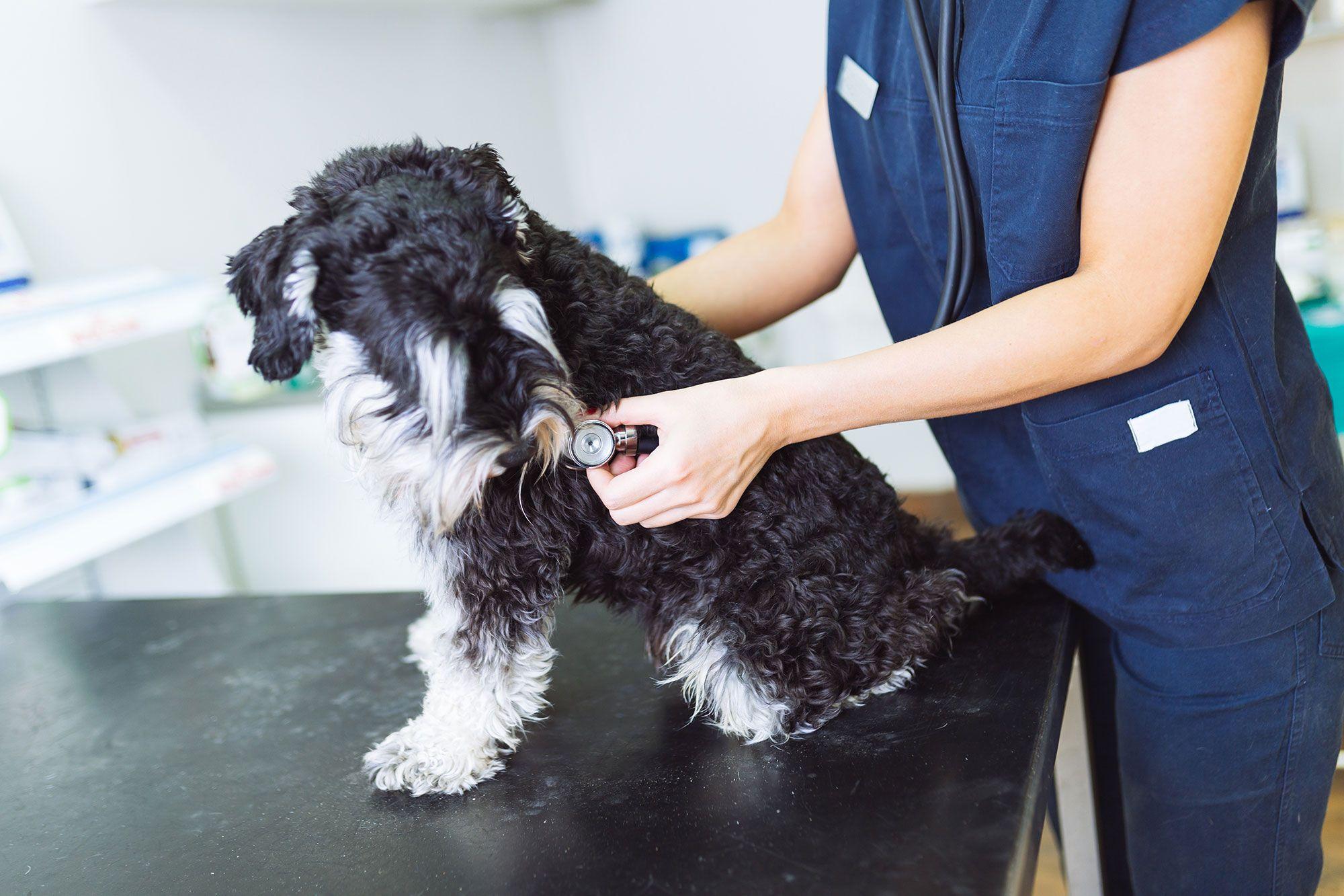 artrosis canina perros