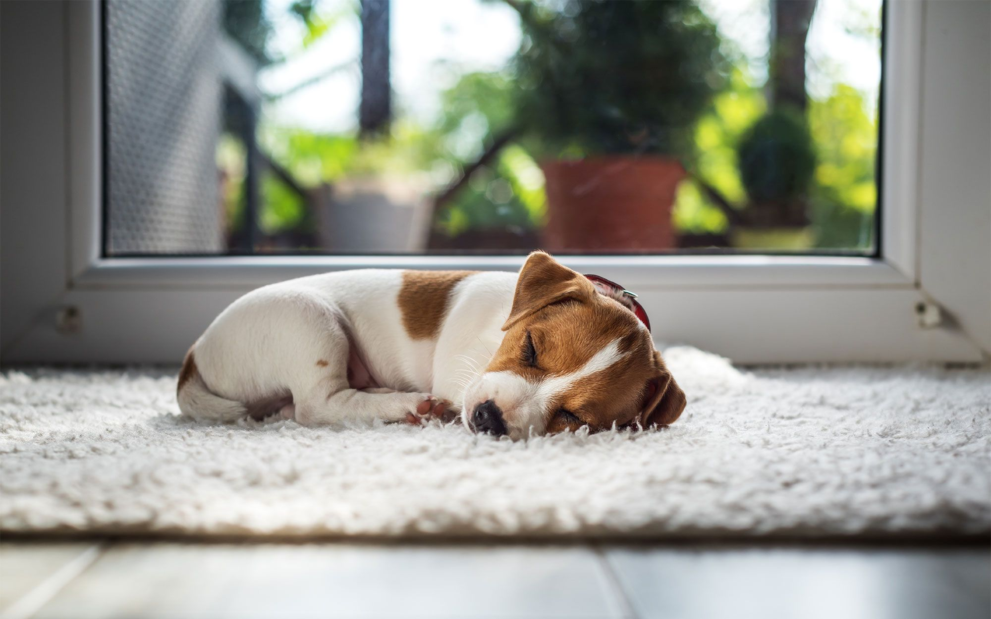 perros dormir edad