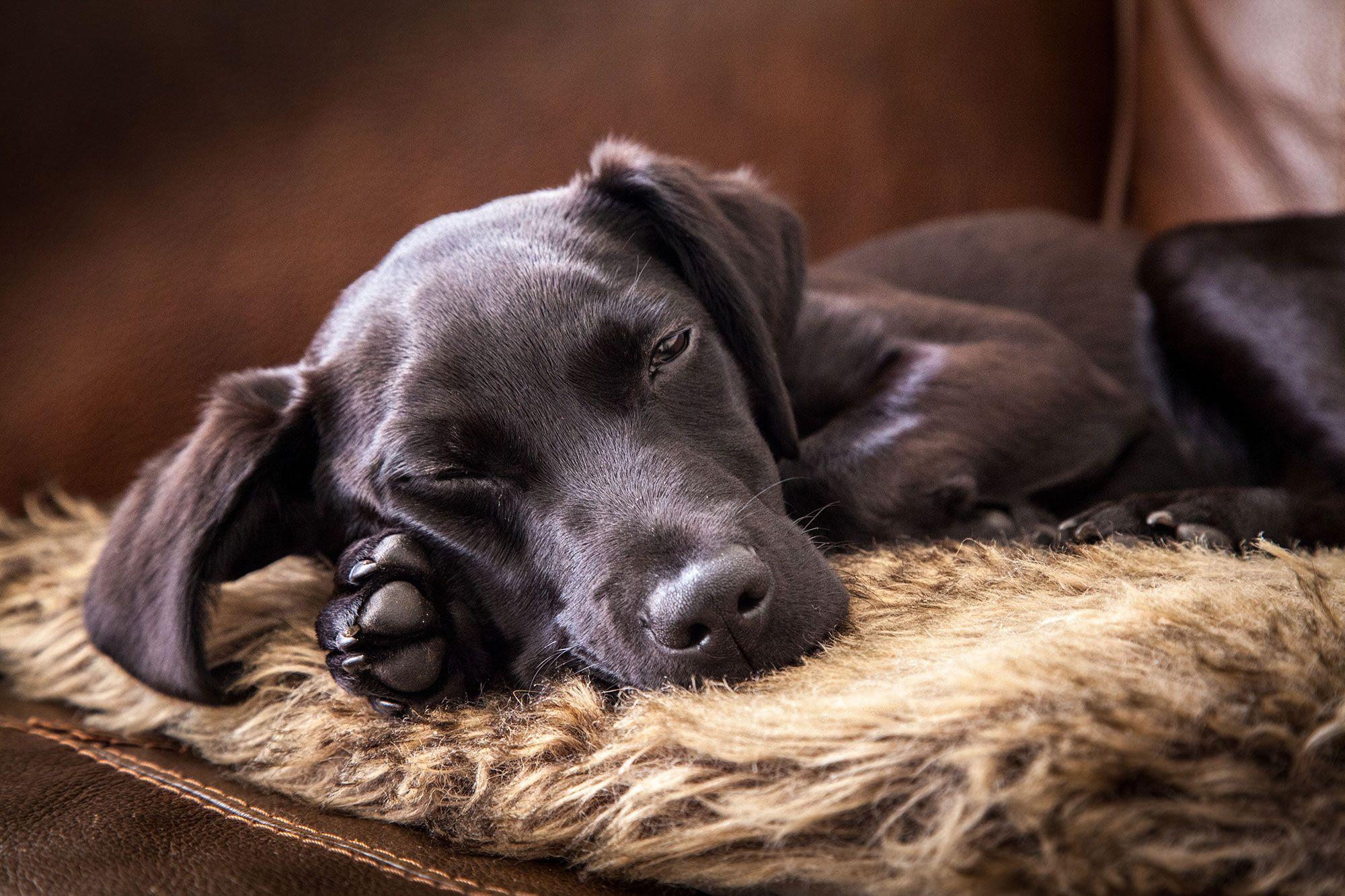 perros ayuda dormir