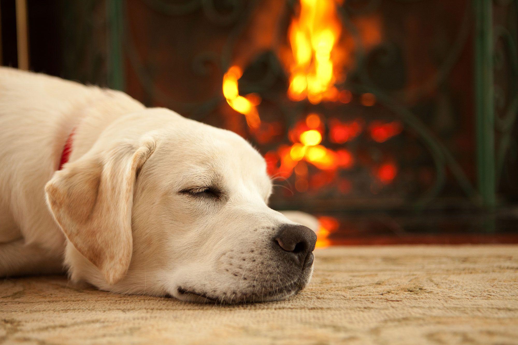 perros dormir época año
