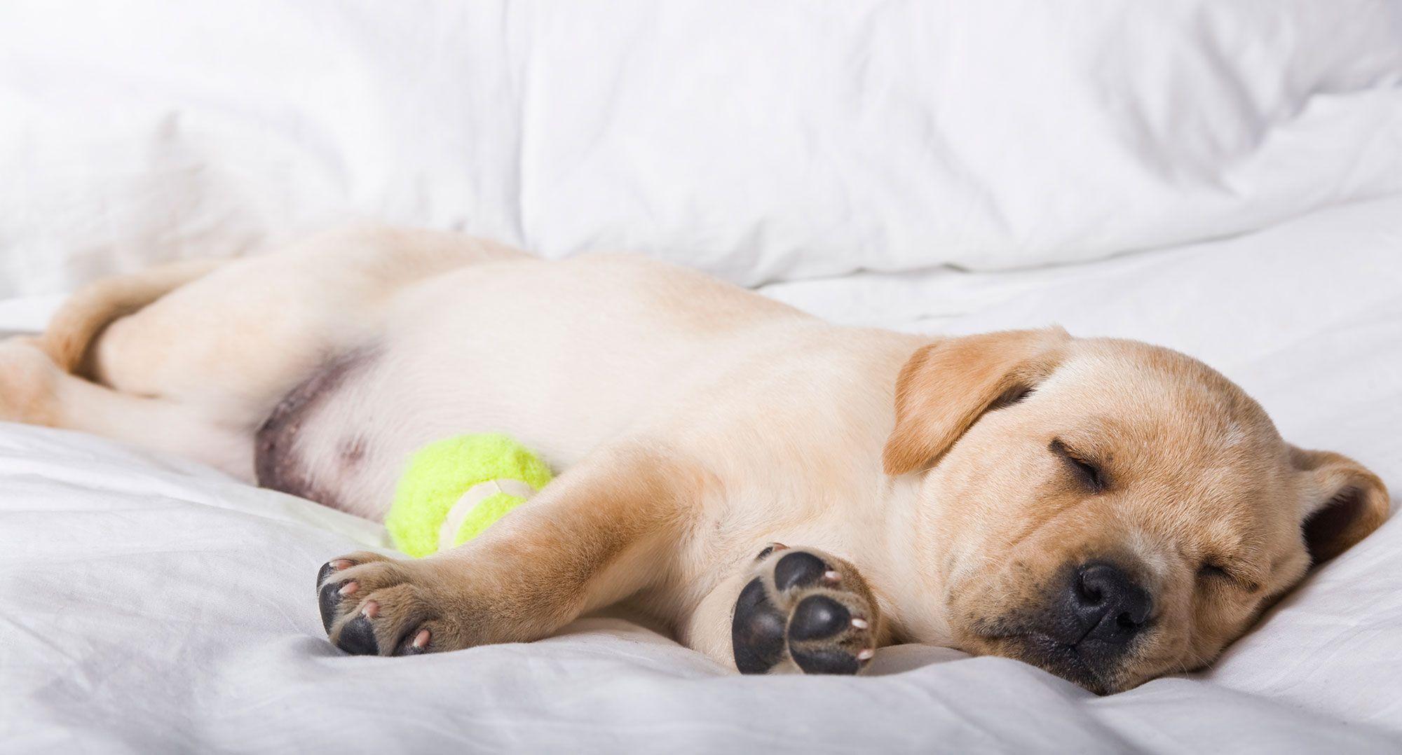 perros dormir actividad física