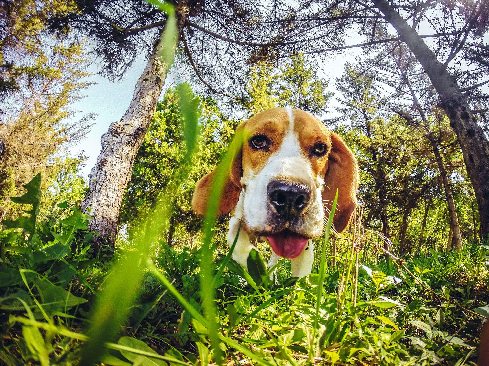 olfato perro