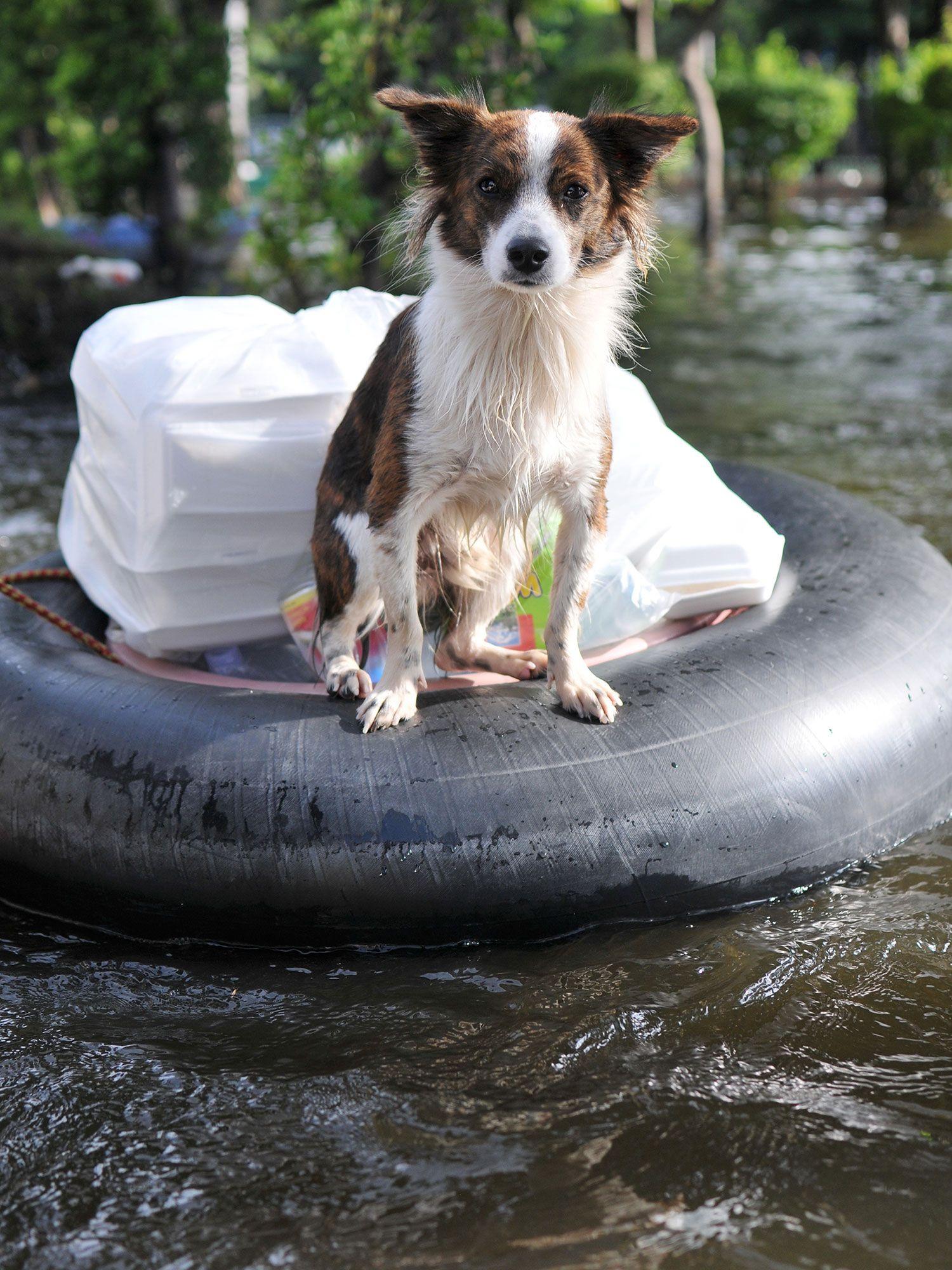 mascotas desastres naturales
