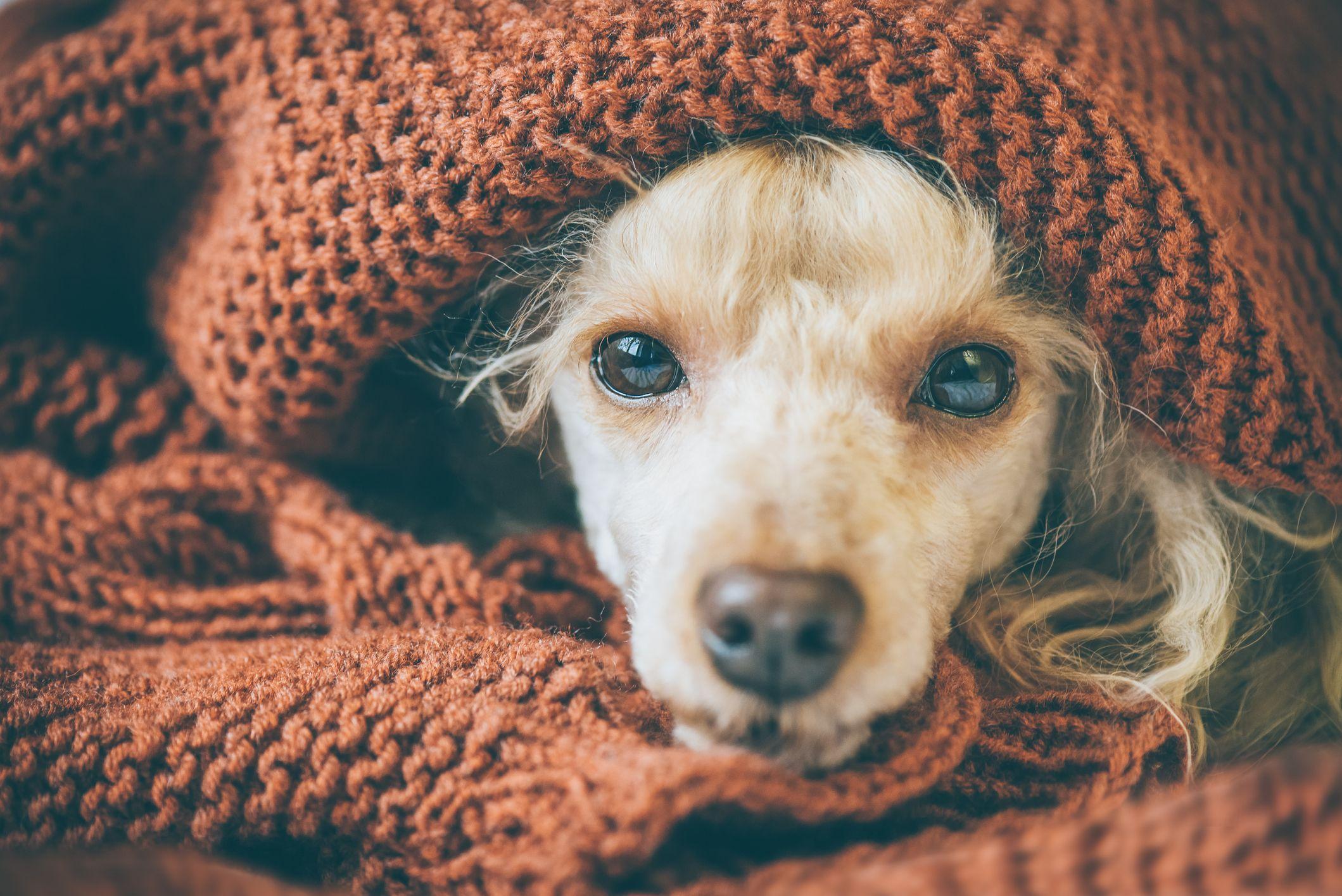 resfriados mascotas otoño