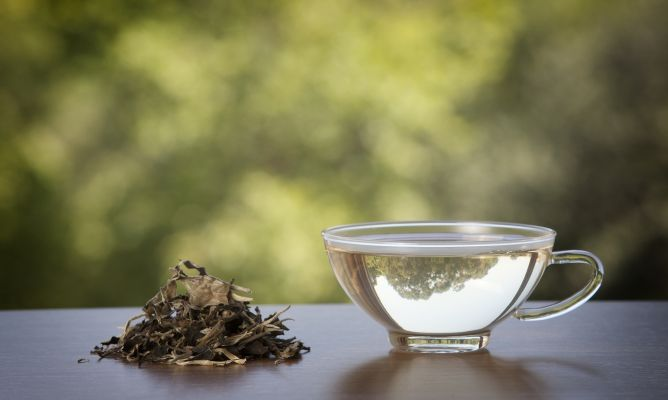 Té blanco, beneficios