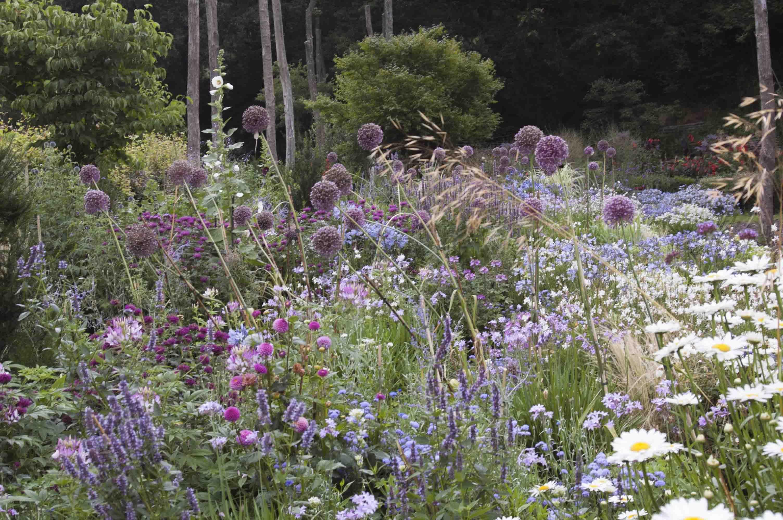 Floración de agapantos, margaritas, dalias, monardas y los ajos gigantes