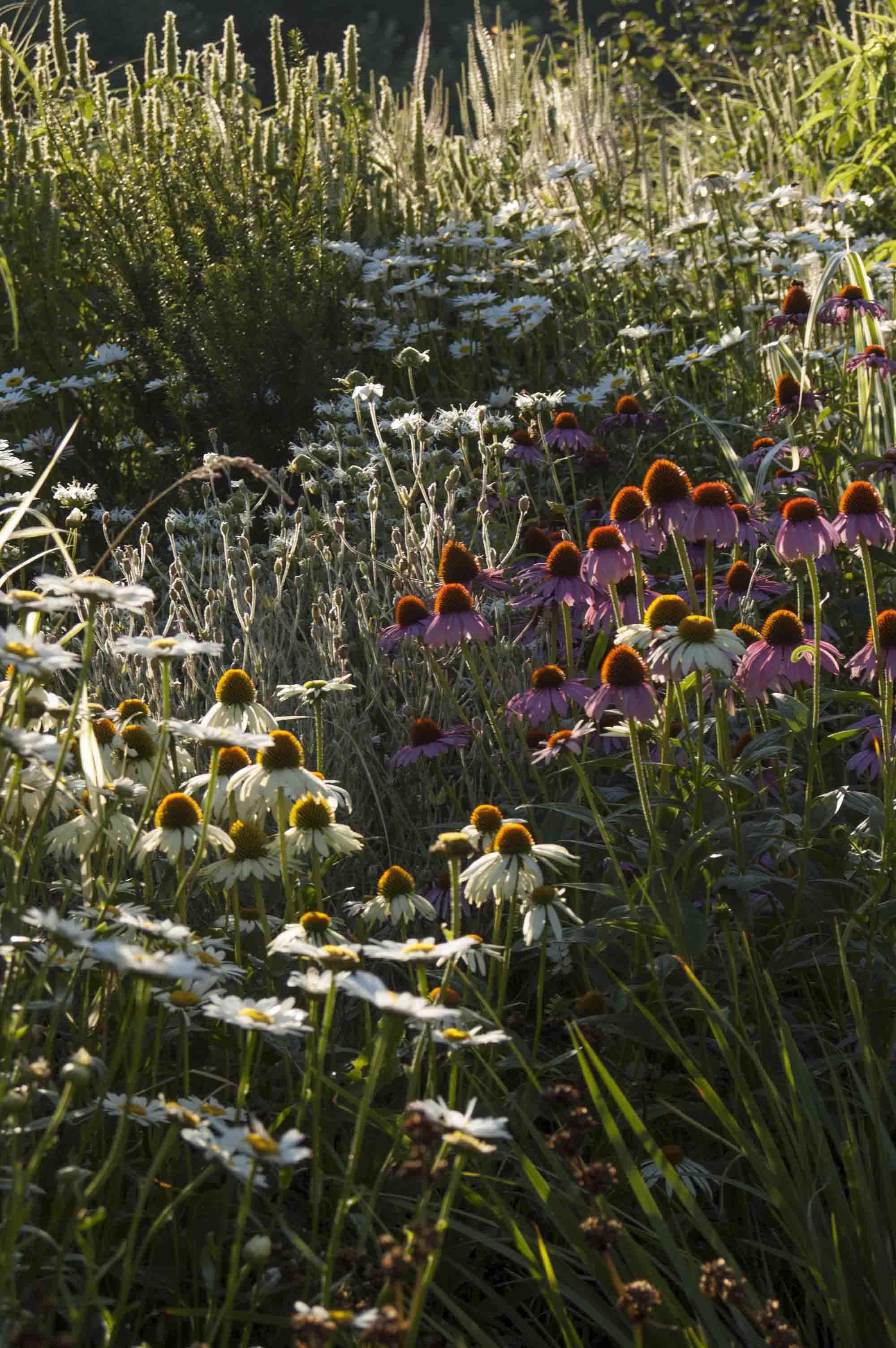 Floraciones blancas