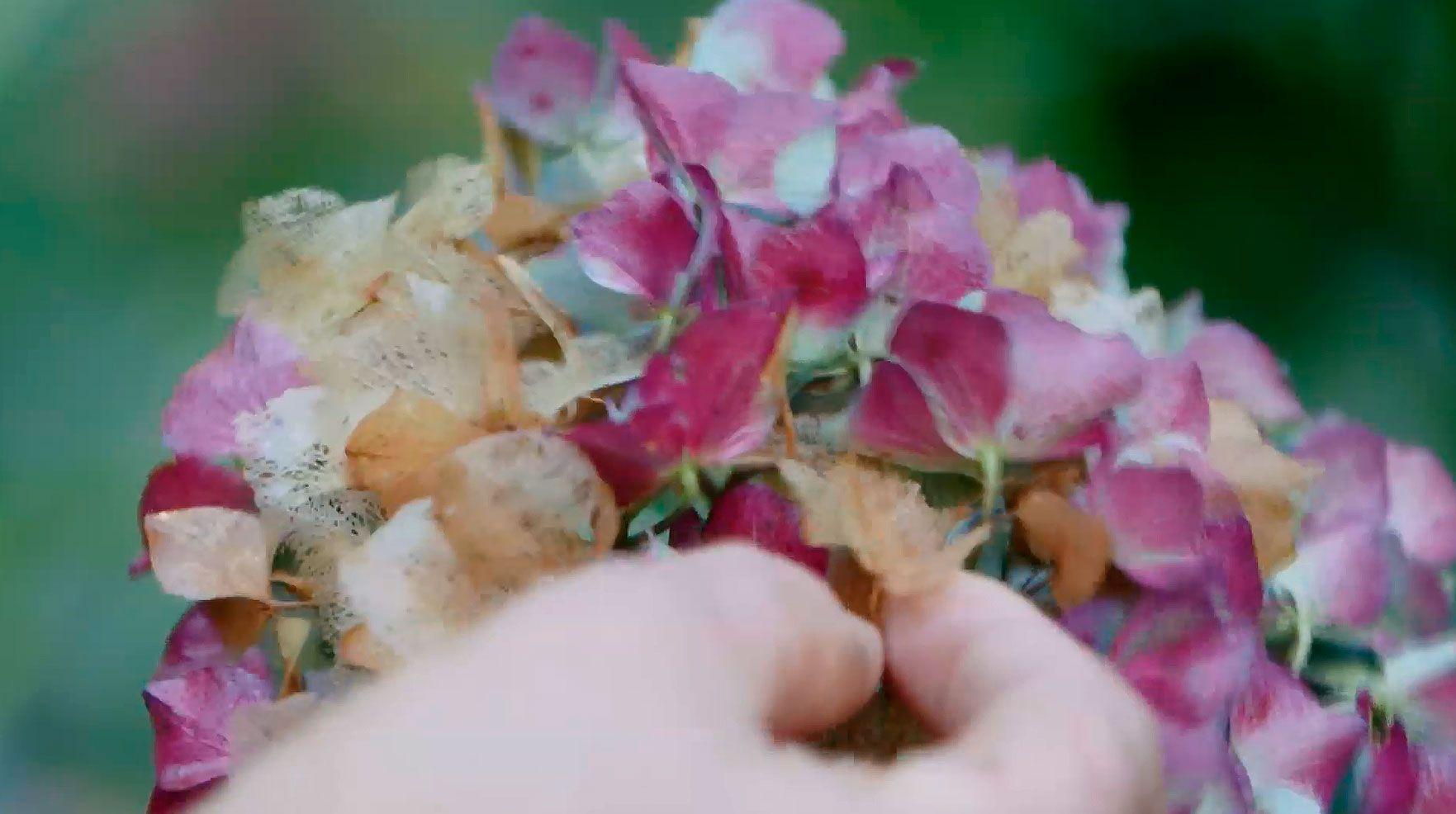 hortensias otoño