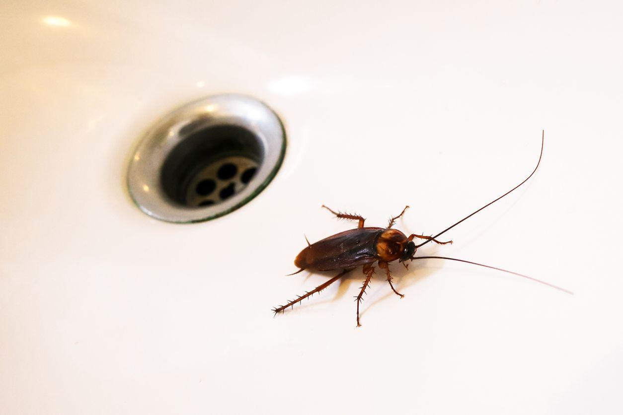 6 formas de prevenir la aparición de cucarachas en casa