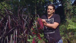 Pennisetum vertigo - Combinar con amaranto
