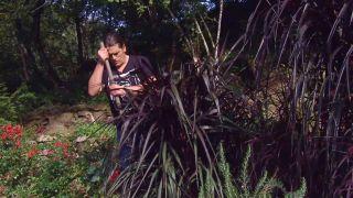Pennisetum vertigo - Cuidados