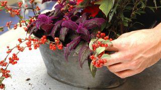 Hacer centros florales con bayas - Detalle