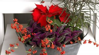 Hacer centros florales con bayas - Detalle final