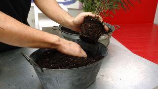 Hacer centros florales con bayas - Paso 2