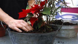 Hacer centros florales con bayas - Paso 3