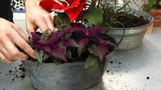Hacer centros florales con bayas - Paso 4