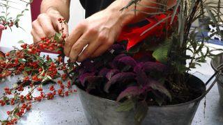Hacer centros florales con bayas - Paso 5