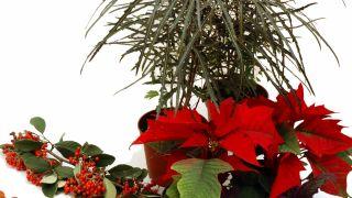 Hacer centros florales con bayas - Plantas