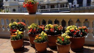 Decorar terraza con begonias y alegrías - Detalle