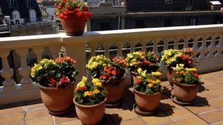 Decorar terraza con begonias y alegrías - Detalle final