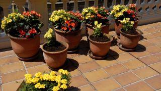 Decorar terraza con begonias y alegrías - Plantar anthyrium