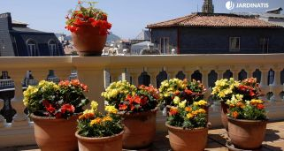 Decorar terraza con begonias y alegr�as