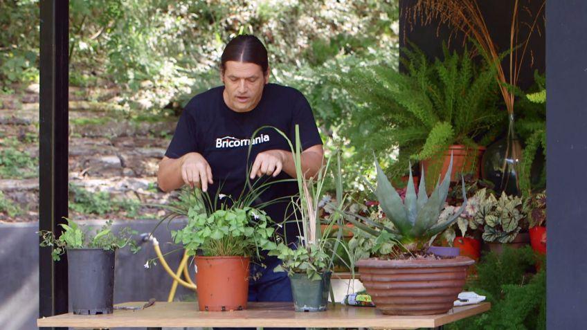 Los consejos de jardinería del fin de semana 28 y 29 de octubre de ...