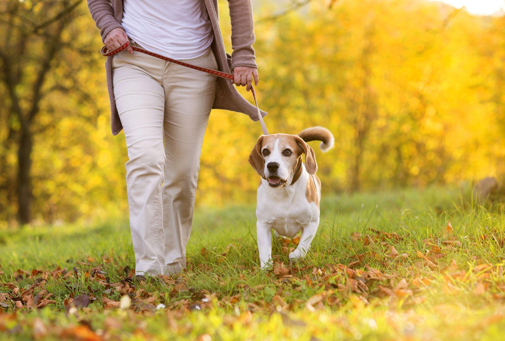 perros paseos