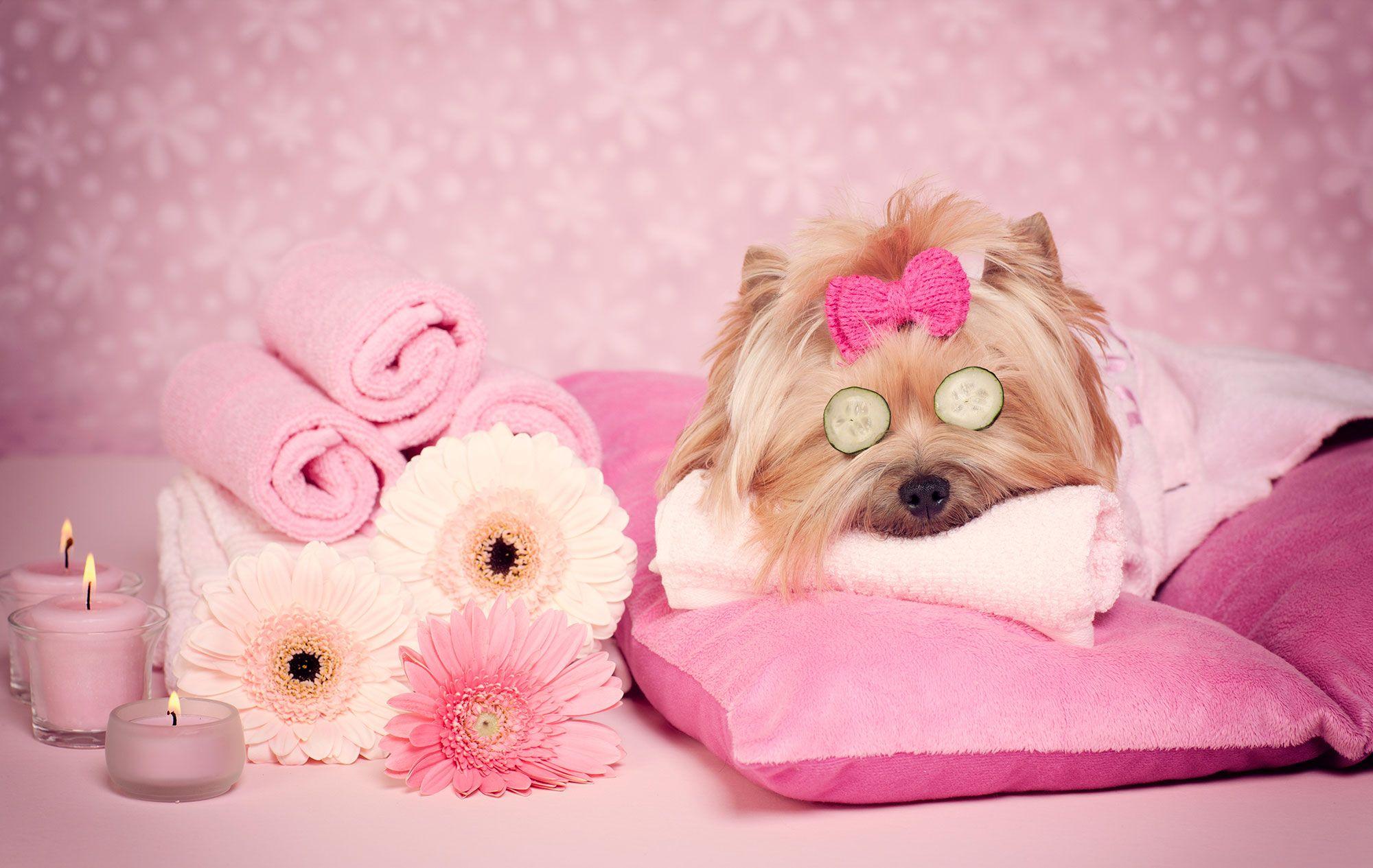 aromaterapia animales