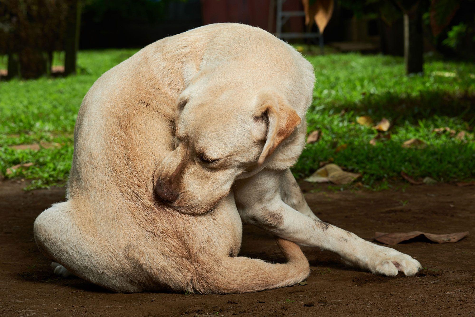 trastornos perros